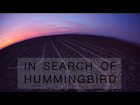 In search of Humming-bird 04